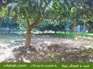 ویلا باغ شمال|ویلا باغ محمودآباد|ویلا باغ فروشی در محمودآباد|ویلا باغ فروشی محمودآباد