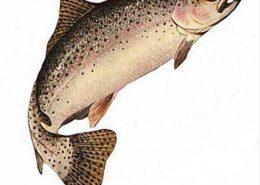 فروش پرورش ماهی غزل آلا